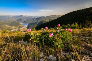 St Andre les alpes - Nature
